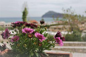 Flowers of Pelagos Holidays Apartments